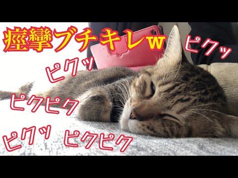爆睡して痙攣する猫を撮ってたら何故かキレられましたw