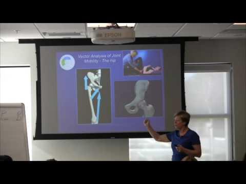 ISM & Hip Vector Analysis