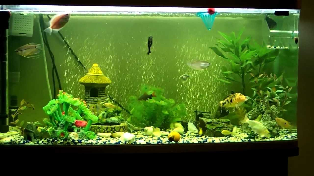 Blood worms frenzy 20 fish in 250 litre aquarium devour for Aquarium boule 20 litres