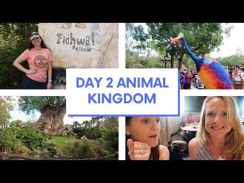 SOLO DISNEY WORLD DAY 2, Animal Kingdom And Flying Fish