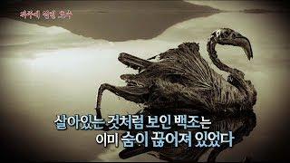 [서프라이즈] 모든 생명체는 말라 죽는 죽음의 호수