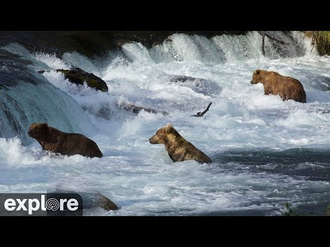Riffles - Katmai National Park, Alaska powered by EXPLORE.org