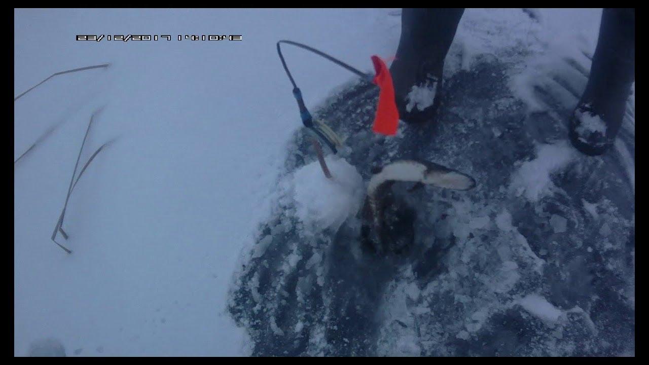 работает ловля щуки на жерлицы зимой на реке применению