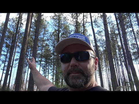 WHY BUY LAND? BUILD WEALTH WITH TIMBER, AND FORESTRY EDUCATE YOURSELF