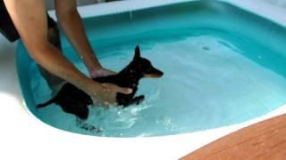 110810 我家のプール開きに合わせて、泳ぎの特訓をするトイマンチェスタ...