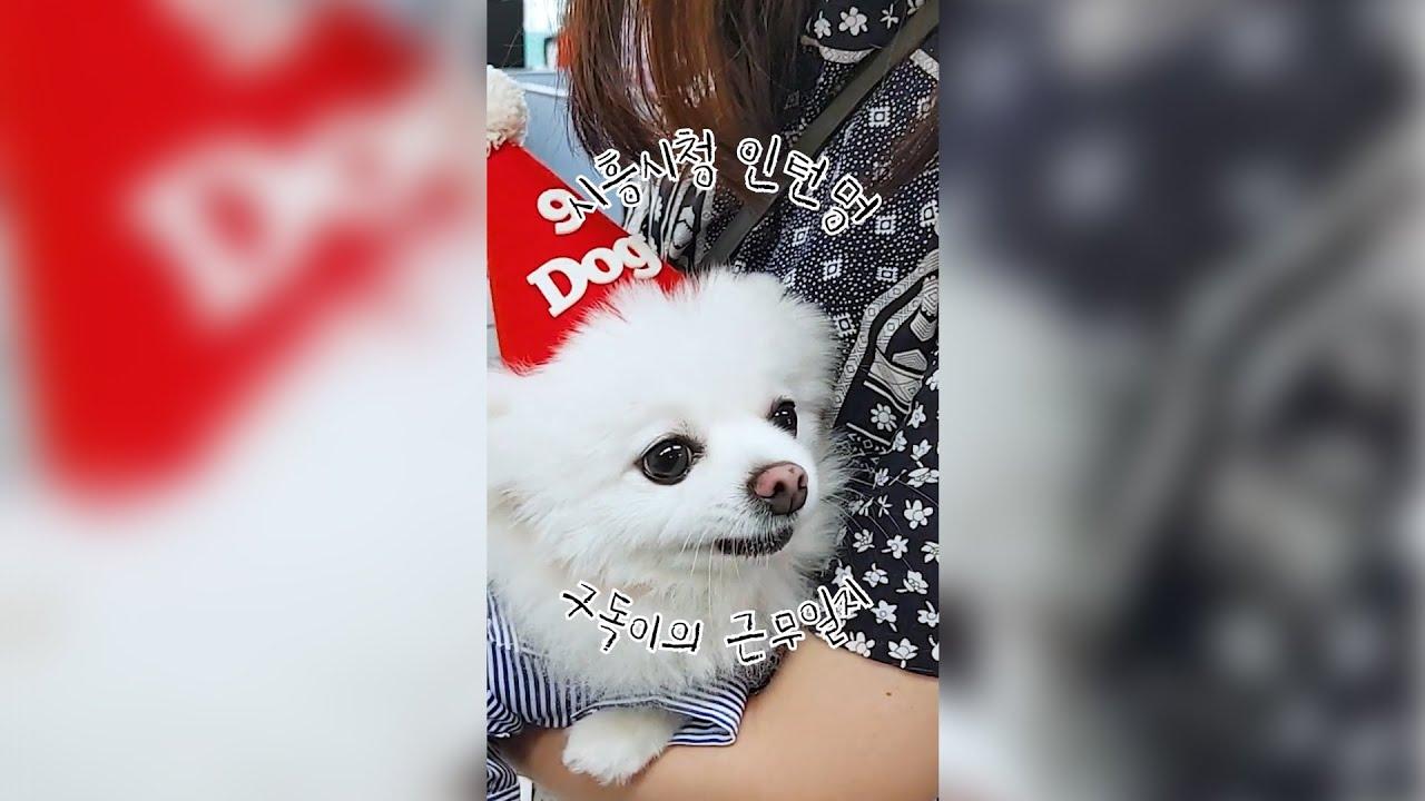 인턴멍🐶구독이의 시흥시청 근무일지 시즌2🐾 ep.01 치열한 경쟁을 이겨낸 2대 구독이🐶의 치명적인 매력은?🥰