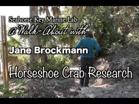 Walk-about on Seahorse Key beach with Jane Brockmann 11-30-2017