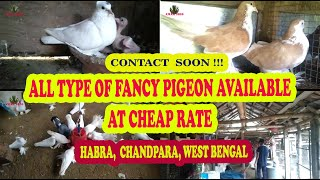 FANCY PIGEON AT CHEAP RATE  | GOOD QUALITY PIGEON SETUP | HABRA, WEST BENGAL | 12TH JUNE 2021 UPDATE