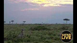 safariLIVE - Sunset Safari - December 9, 2018