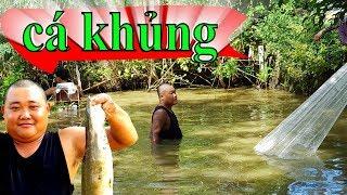 CHÀI LƯỚI Kết hợp KÍCH ĐIỆN Bắt Được Cá TRÊ Lâu Năm - AO CÁ TRÊ KHỦNG - Sơn Dược Vlogs