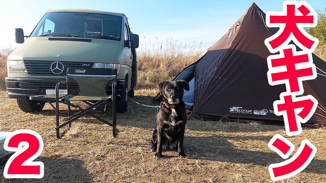 【犬とキャンプ②】愛犬と過ごす夜〜思ってた以上に楽しく、思っていた以上に疲れた(笑)