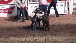 Calgary Stampede Pony Abuse