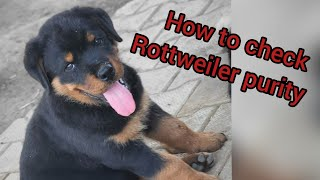 How to Check Purity of Rottweiler Breed | Rottweiler dog Pure or Mix | PupsnPaws [Hindi/urdu]