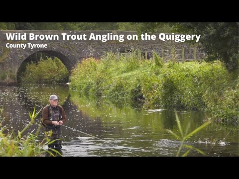 Wild Brown Trout Fishing On The Quiggery River, Co Tyrone