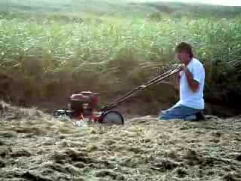 Dog watches Frans New and Improved method of Mowing Beach Grass