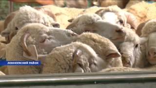 Крупнейшее в России убойное хозяйство появилось на Ставрополье