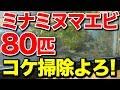 【庭の池】池のコケ掃除のためミナミヌマエビ80匹投入 #140 2018.9.13