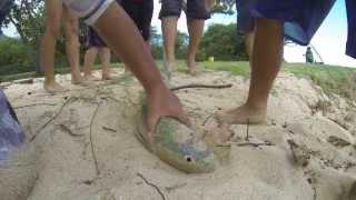 hkd 13 the return spearfishing hawaii