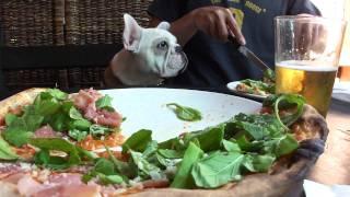 【bobby The French Bulldog】 I'm @ La Pizzeria Italian Pizza, Campbell