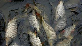 Рыбак Рыбаку 461