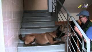 Как дрессировать собак,  команды сидеть, лежать, стоять