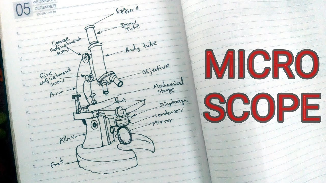 Easy Microscope Drawing Biology Class 10 Student Diagram