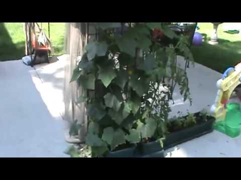 Ερασιτεχνική Καλλιέργεια με Autopot (Ελληνικοί Υπότιτλοι)