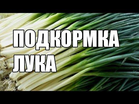 Вопрос: Чем удобрять зелёный лук на огороде, чтобы рос?