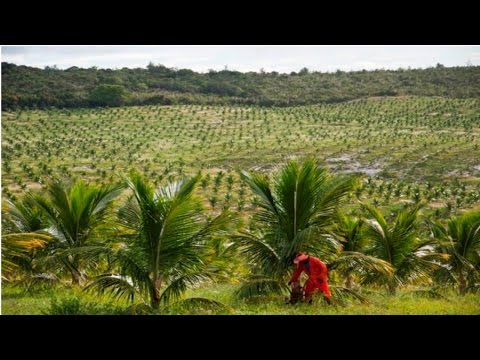 Clique e veja o vídeo Curso Irrigação do Coqueiro Anão