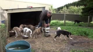 Greyhound care: The basics of successful greyhound breeding
