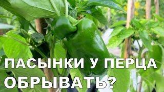 ПАСЫНКИ у ПЕРЦА. Формирование перца 1 / How to Prune Pepper Plants 1. Suckers
