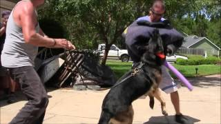 Miami Dog Whisperer Protection Dog Training Academy Highlights!