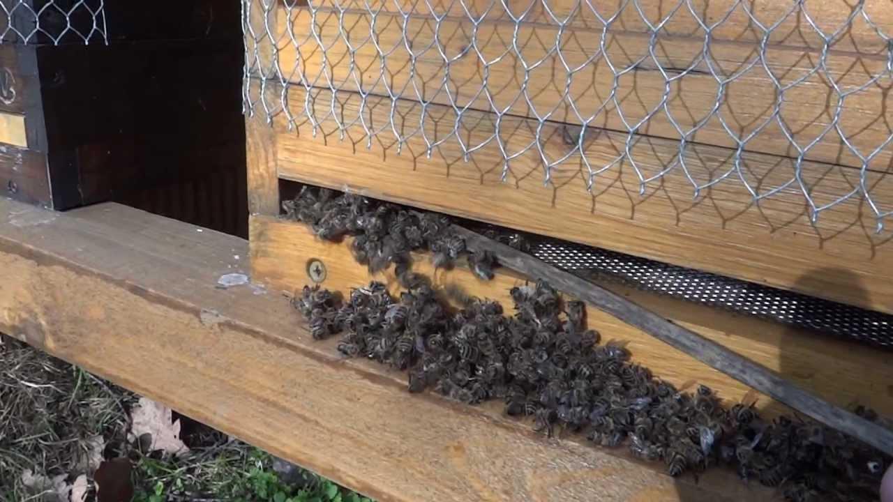 flugloch kontrolle tote bienen vor flugloch entfernen youtube. Black Bedroom Furniture Sets. Home Design Ideas