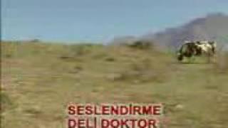Deli doktor ve karateci inek