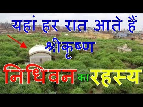 निधिवन का रहस्य Vrindavan || Secrets of Nidhivan Vrindavan ||मिस न करें