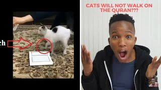 NON MUSLIM REACTS TO Cats Will Not Walk on The Quran, experiment with 5 cats