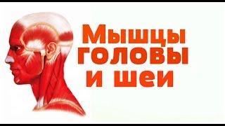 Видео-урок по анатомии . Мышцы шеи и головы / М'язи шиї і голови(У вас есть возможность изучать анатомию в домашних условиях на украинском языке! Надеемся наши уроки помог..., 2014-09-09T18:06:36.000Z)