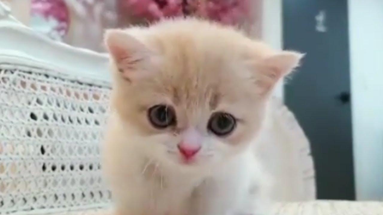 Cute Cat Reaction Whatsapp Status Video Youtube