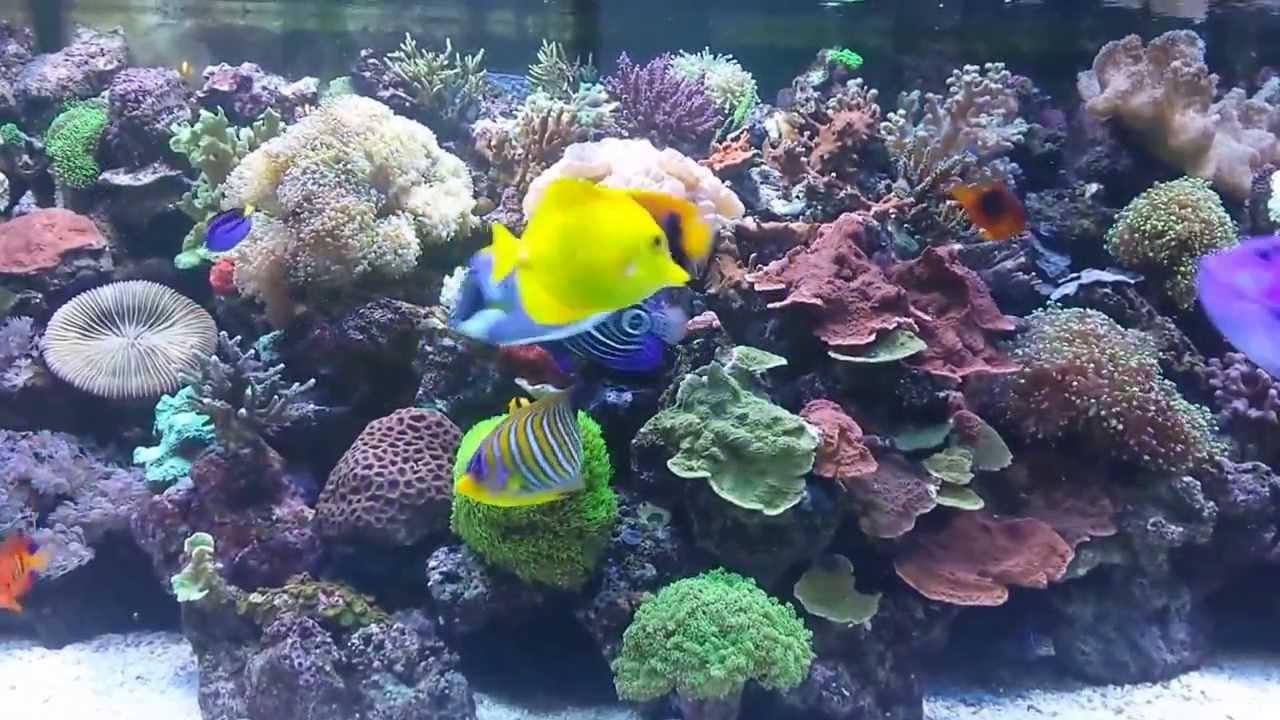 Saltwater Aquarium Tropical Fish   YouTube