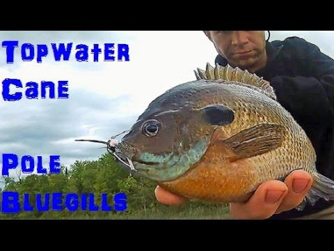 big-topwater-cane-pole-bluegills