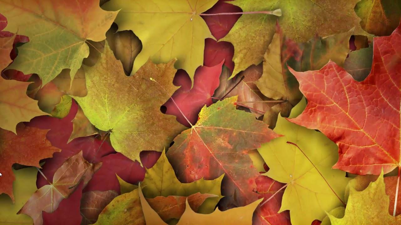 осень фото на заставку