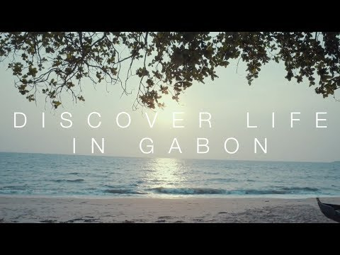 Discover life in gabon