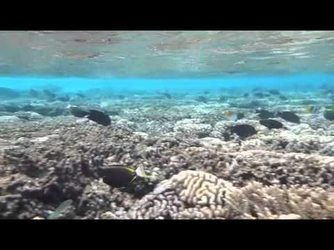 Marine Life in the Tuamotus Islands - Snorkeling with Sharks