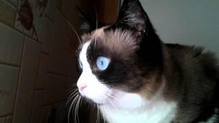 Кошка смотрит на птиц