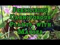 Maxsea Fertilizer: How to Foliar Feed Carnivorous Plants with Maxsea Fertilizer.