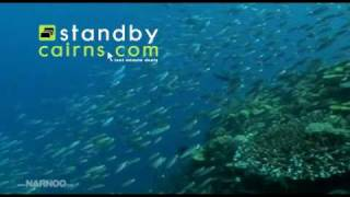 Port Douglas Tours - Great Barrier Reef Thumbnail