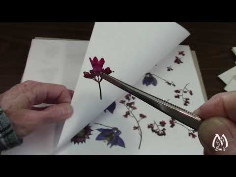 Part 2 | Results of Pressing Flowers | Peeking at Pressed Flowers | Flowers to Press
