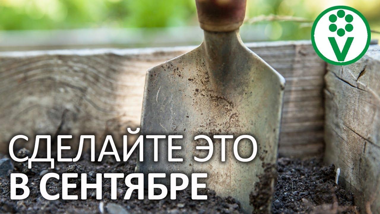 САМЫЕ ВАЖНЫЕ ДЕЛА НА УЧАСТКЕ В СЕНТЯБРЕ. Календарь садовода и огородника: начало осени