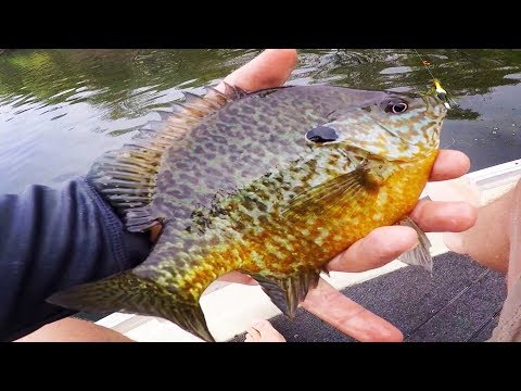 Fishing for Big Spring Bluegill and Pumpkinseed