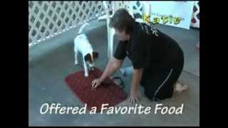 Positive Dog & Puppy Training, Jacksonville, Fl -owners, Puppies & Dogs Demonstrate Clicker Skills